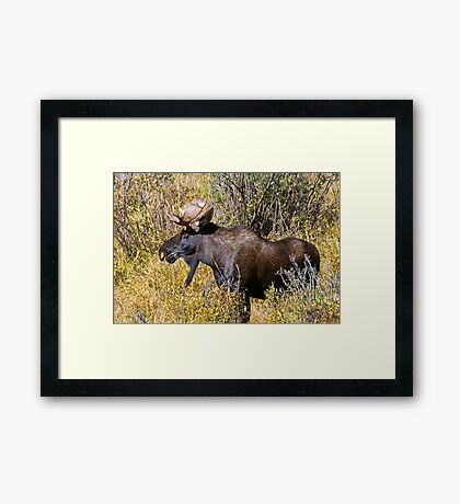 Like My Goatee? Framed Print