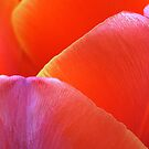 Subtle macro tulip hues by mooksool