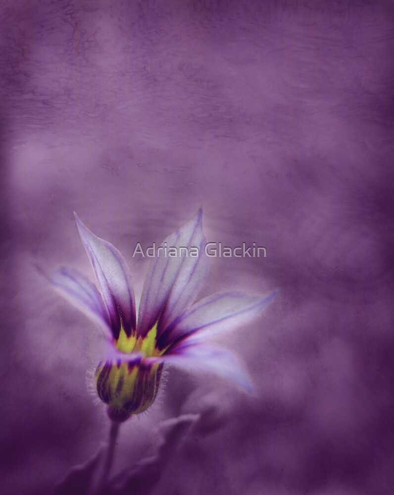 . . . d r e a m i n g  o f  y o u . . .  by Adriana Glackin