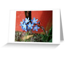 Forgetmenots Greeting Card