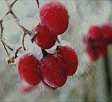 Red berries in winter by Vasile Stan