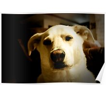 Faithful Companion Poster