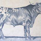 "Early Work - ""Texas Longhorn Bull"" by louisegreen"