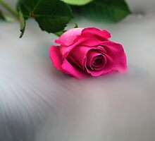Rose in the Mist by Zosimus