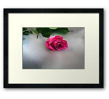 Rose in the Mist Framed Print