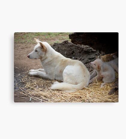 Dingo and pups Canvas Print