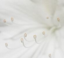 Simply White by Kim Roper