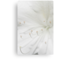 Simply White Canvas Print
