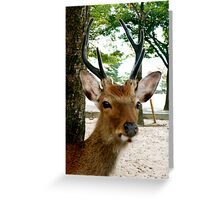 Deer - Hiroshima Greeting Card