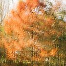 Autumn Tree by evap