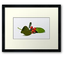 Christmas berries 2 Framed Print