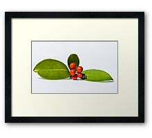 Christmas berries 3 Framed Print