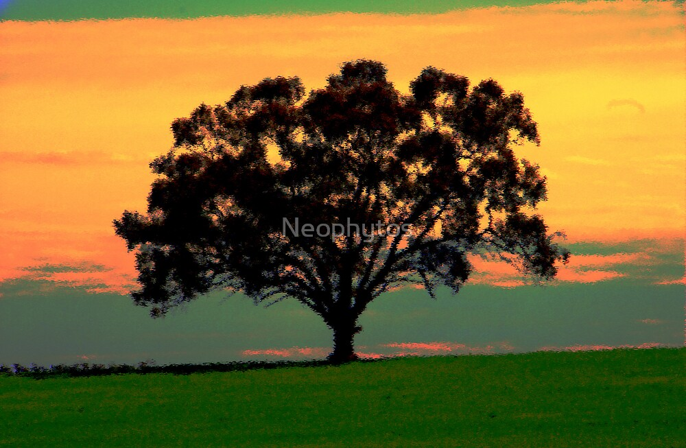 Red Gum  by Neophytos