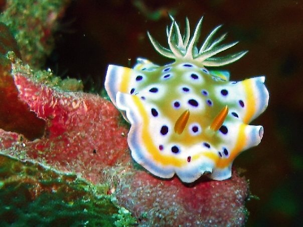 Nudi by Christopher Hamilton Lansell