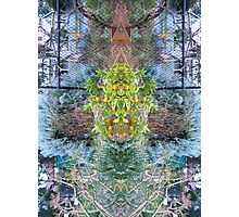 Northcote Community Gardens  Fantasy 11 Photographic Print