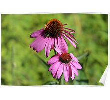 Pink summer flowers Poster
