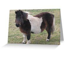 Shetland Pony Greeting Card