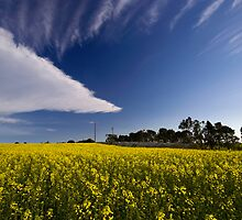 Triangular cloud and canola field by Akif  Kaynak