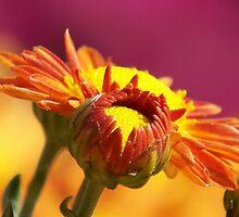 Autumn Colors by ChereeCheree