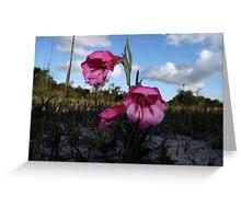 Whiteman wildflowers Greeting Card