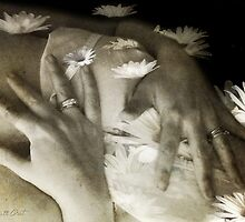 Petals...absorbed by the palm hands… by Daniela M. Casalla