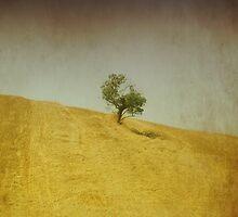 Tuscany VI by marziafrank