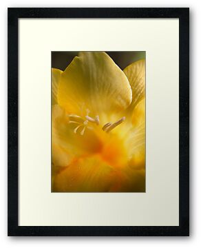 Golden Freesia by Lucy Hollis