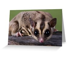 Nosy Glider Greeting Card