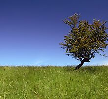 Lone Tree by Paul O'Connell