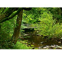 Across the River Twiss Photographic Print