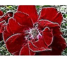 Fabulous Flower Photographic Print