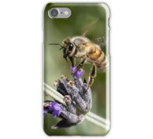 Looking for Lavender iPhone Case/Skin