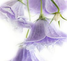 Flowers On White by Ann Garrett
