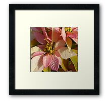 Middle Bee Framed Print