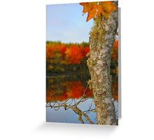 Beauty and the Birch Greeting Card