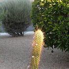 Solved!! Arizona! by Bonnie Pelton