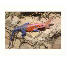 East African Rainbow Agama, Mating Art Print