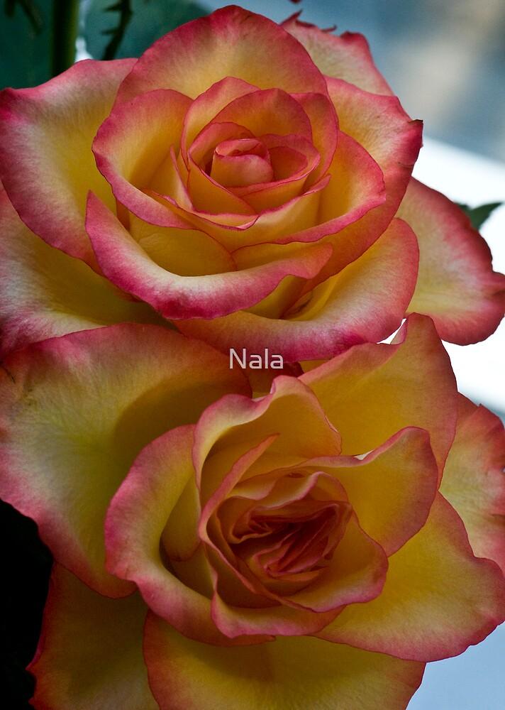 Beauty  by Nala