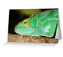 Portrait: Chameleon , Madagascar  Greeting Card
