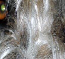 Irish Wolf Hound Face Close Up Sticker