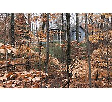 Home Among the Beeches Photographic Print