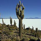 Isla del pescado - Bolivia by chrisfx