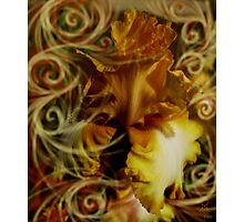 WALTZING WITH IRIS Photographic Print