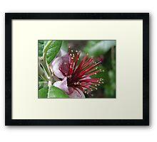 Pineapple Guava Framed Print