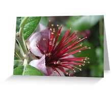 Pineapple Guava Greeting Card