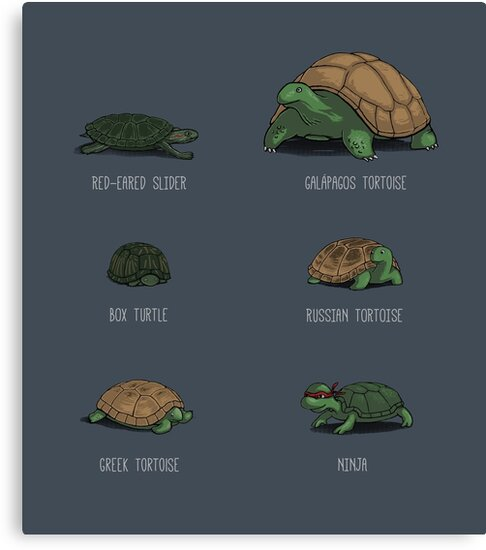 Know Your Turtles by tyna