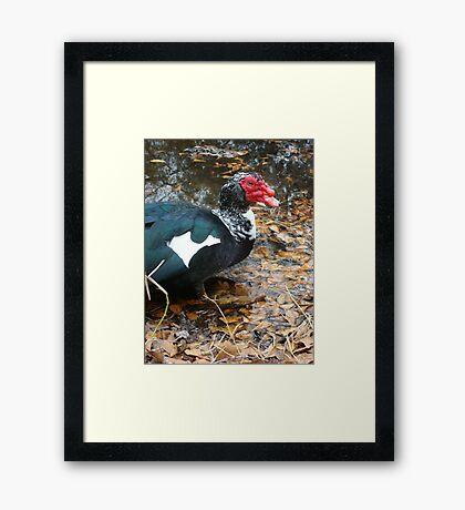 Uncle Caruncle Framed Print