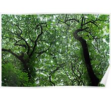 Rainforest Canopy Poster