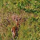 The beauty of hunting by Jim Caldwell