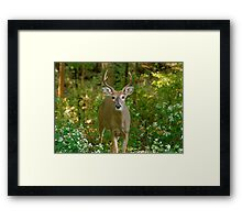Looking for trouble Framed Print